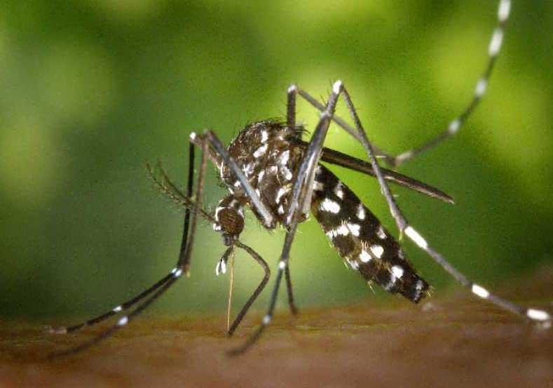 учените успяха ефективно да унищожат комарите