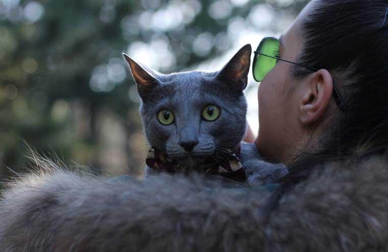 стопаните на котки