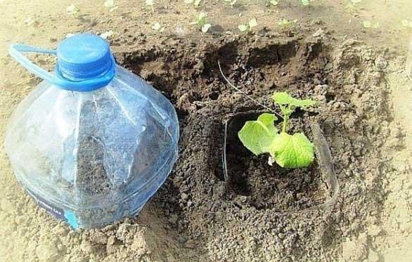 оранжерия с краставички