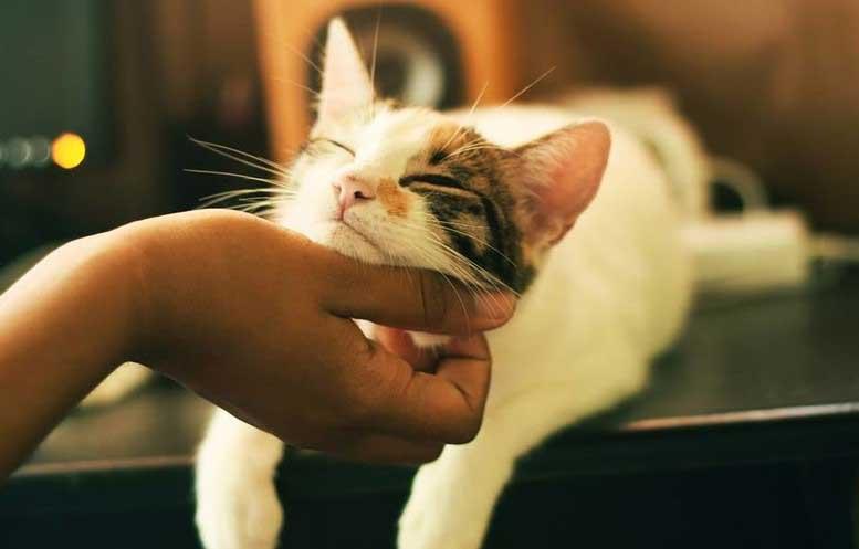 ако котката
