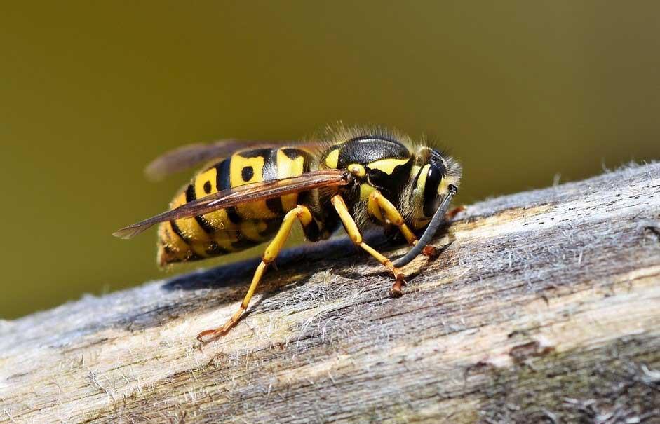 ухапвание от пчела