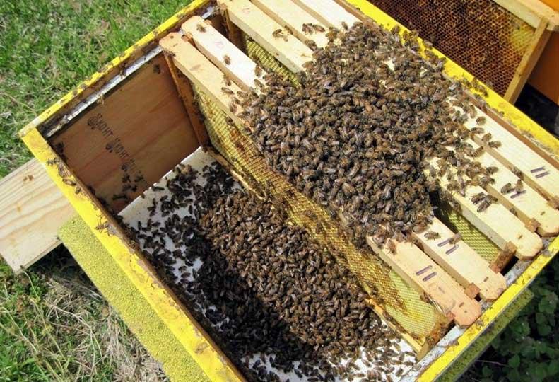 пчелите умират прогресивно