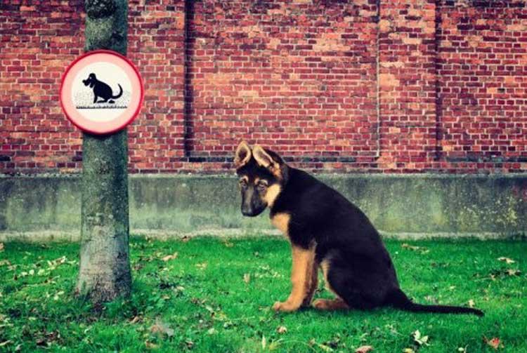 кучето се изходи