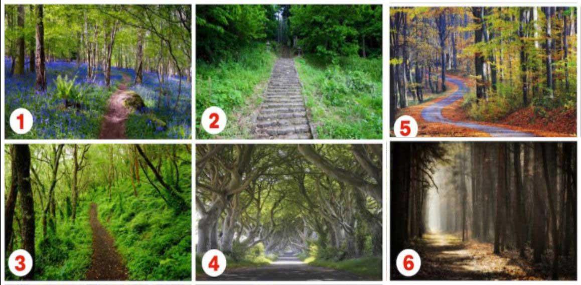избери път