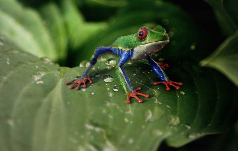 притча за храброто жабче