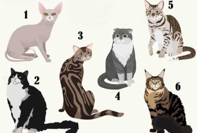избери котка
