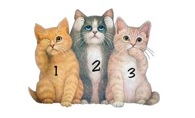 изберете едно коте