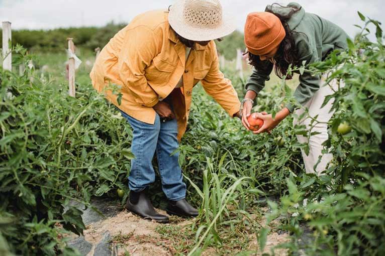Как да се справите с вредителите по растенията?